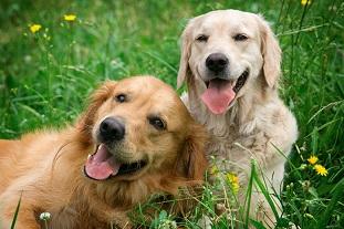 Glada hundar